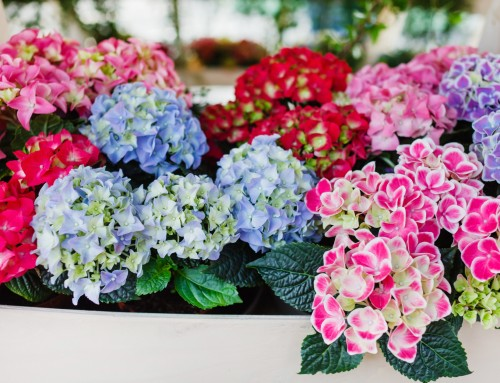Your Guide to Indoor Flowers